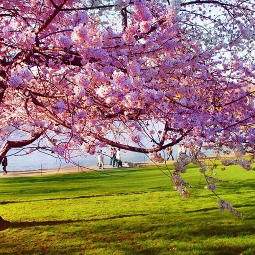 Spring_FSC_Image