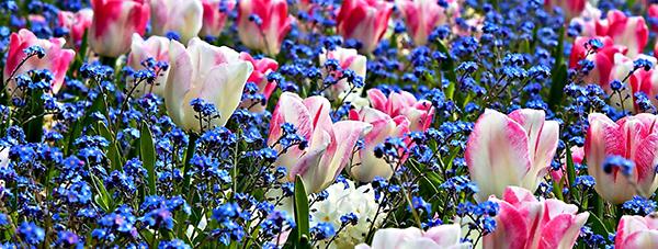 fragrance-floral