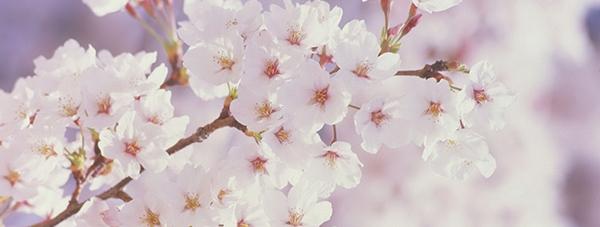 fragrance-spring