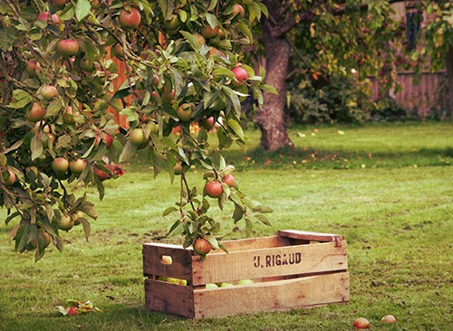 An Orchard of Apple and Wood Fragrances - Fragrance Sample Collection