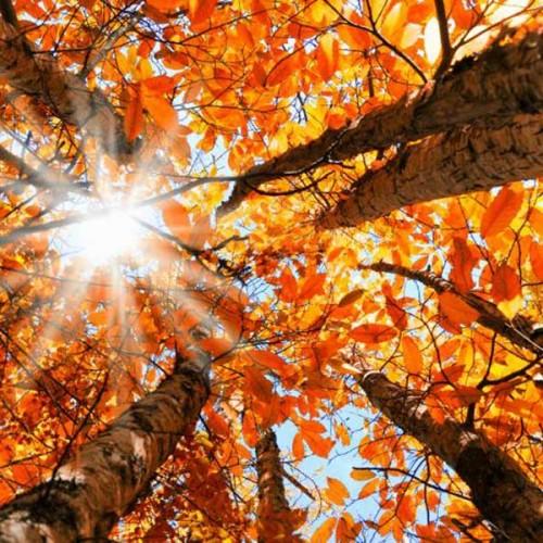 Autumn_FSC_Image
